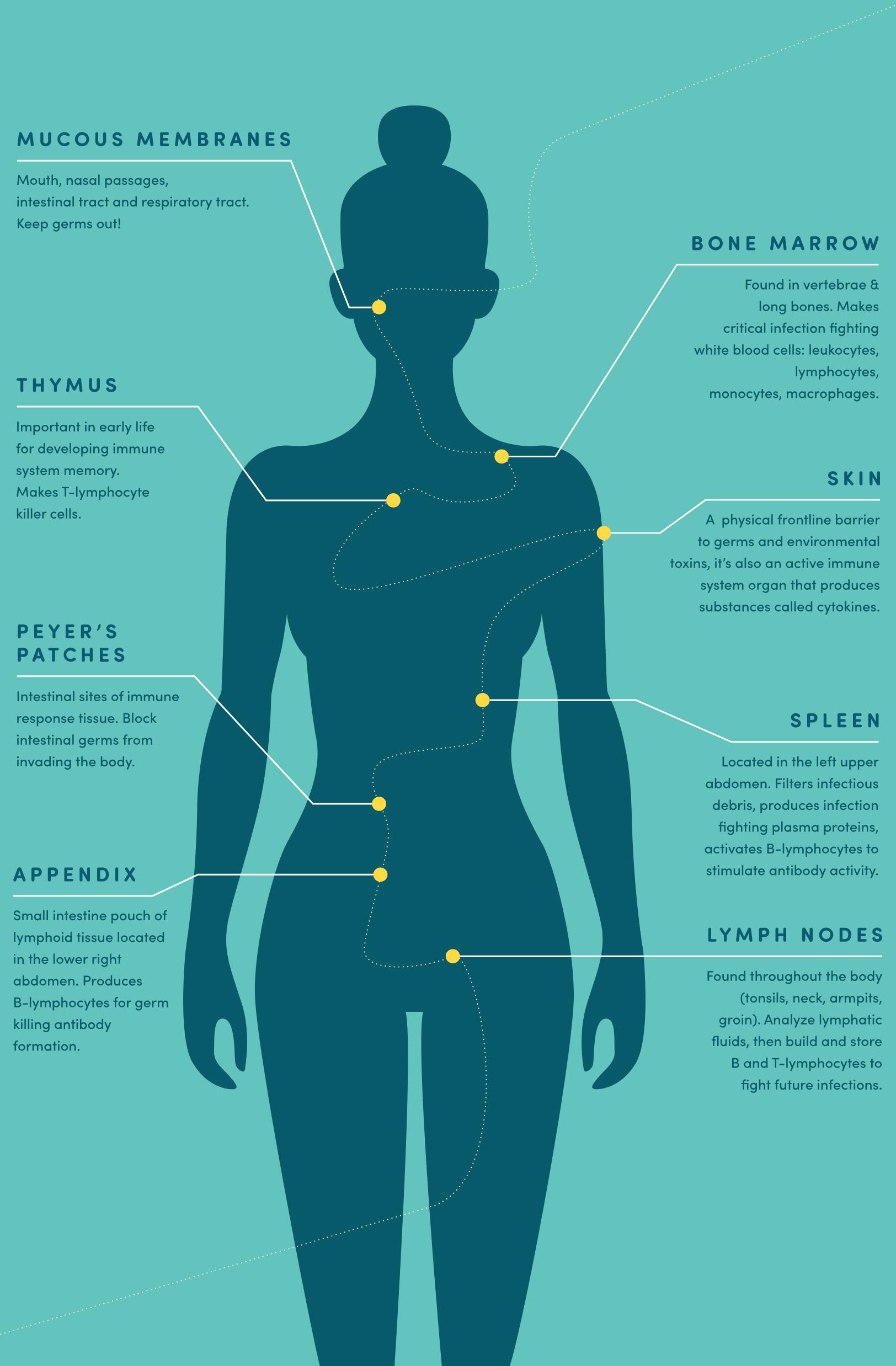 Immune System Features